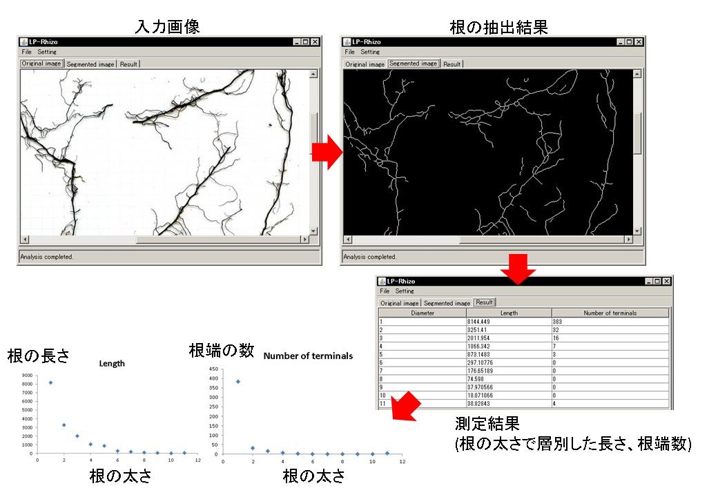 LP-Rhizome-web-fig